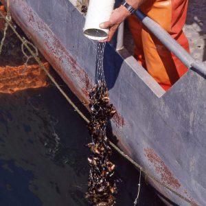 Mussel Nets